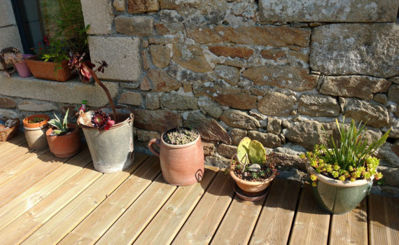 succulentes 2